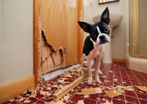 What Does a Pet Owner Need to do to Sell Their Home