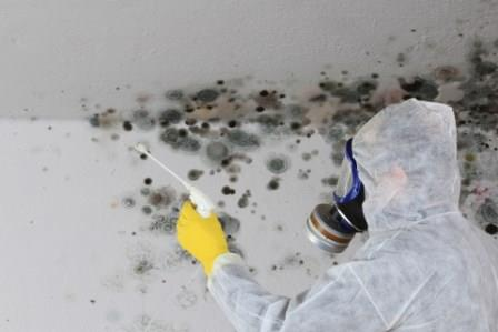 Sell a house with Mold as-is